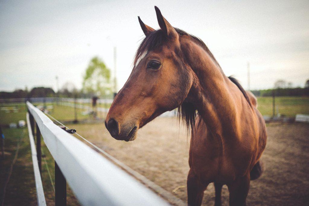 Consejos para montar a caballo